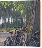 Parked Mountain Bikes Leaning Against A Tree Trunk Wood Print