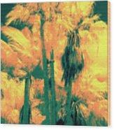 Parking Lot Palms 1 3 Wood Print