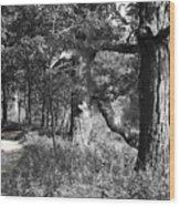 Parkland Trail Wood Print