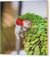 Parrot 2 Wood Print