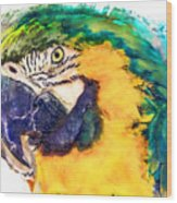 Parrot Ara Watercolor Painting Wood Print