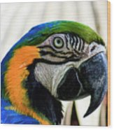 Parrot Head Wood Print