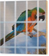 Parrot In A Cage Wood Print