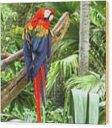 Parrot In Tropical Setting Wood Print
