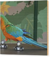 Parrot On Skates Wood Print by Ruth Hallam