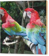 Parrot Partners Time To Make Up Wood Print