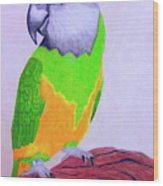 Parrot Portrait Wood Print