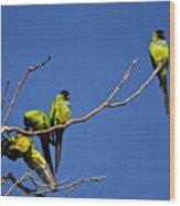 Parrot Squabble Wood Print