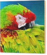 Parrot Time 1 Wood Print