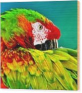 Parrot Time 2 Wood Print