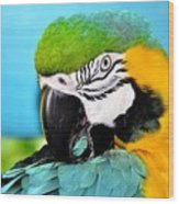 Parrot Time 3 Wood Print