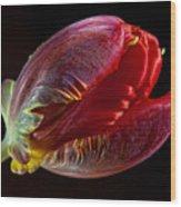 Parrot Tulip 11 Wood Print by Robert Ullmann