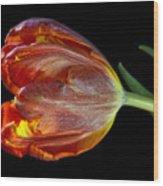 Parrot Tulip 6 Wood Print