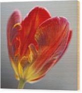 Parrot Tulip 9 Wood Print