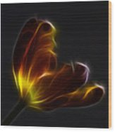 Parrot Tulip Abstract Wood Print