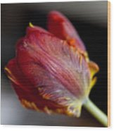 Parrot Tulips 13 Wood Print