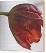 Parrot Tulips 14 Wood Print by Robert Ullmann