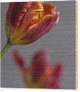 Parrot Tulips 17 Wood Print