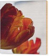 Parrot Tulips 18 Wood Print by Robert Ullmann