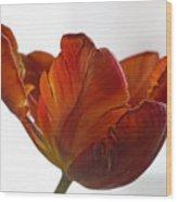 Parrot Tulips 20 Wood Print