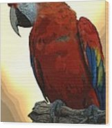 Parrot Watching Wood Print