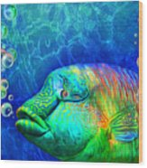 Parrotfish - Rainbow Spirit Wood Print