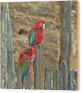 Parrots, Doue-la-fontaine Zoo, Loire, France Wood Print