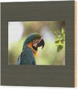 Parrot's Eye Wood Print