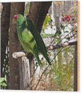 Parrots. Wood Print
