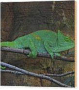 Parson's Chameleon Wood Print