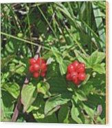 Partridgeberries Wood Print