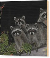 Party Of Five On The Roof Top Wood Print