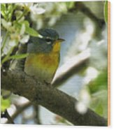 Parula In A Pear Tree Wood Print