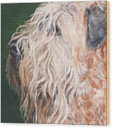 Pascal, Soft Coated Wheaten Terrier Wood Print