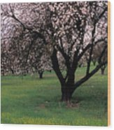 Paso Robles Orchard Wood Print