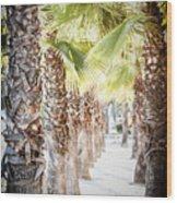 Pass Of Palms Wood Print