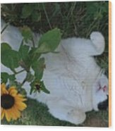 Passed Out Under The Daisies Wood Print