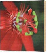 Passiflora Vitifolia Scarlet Red Passion Flower Wood Print by Sharon Mau