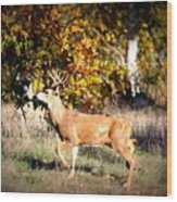 Passing Buck In Autumn Field Wood Print