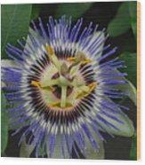 Passion Bloom Vi Wood Print