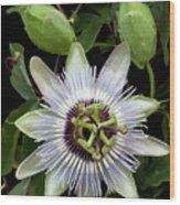 Passion Flower 1 Wood Print