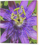 Passion Flower 2 Wood Print