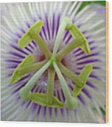 Passion Flower Wood Print by Juergen Roth