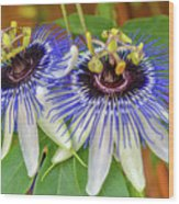 Passion Flower Power Wood Print
