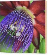 Passion Flower Ver. 11 Wood Print