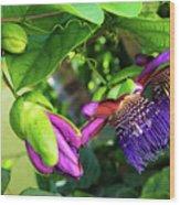 Passion Flower Ver. 14 Wood Print