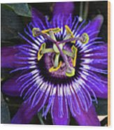 Passion Flower Ver. 4 Wood Print