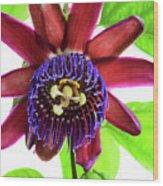 Passion Flower Ver. 5 Wood Print