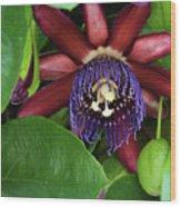 Passion Flower Ver. 8 Wood Print