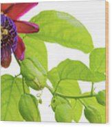 Passion Flower Ver. 9 Wood Print